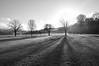 DSC_0025 - Winter trees (SWJuk) Tags: park uk trees winter light england bw sunlight home nikon shadows naturallight lancashire leafless contrejour lightroom burnley 2014 d90 towneley towneleypark nikond90 swjuk mygearandme jan2014