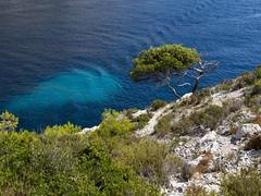Mediterrane (paul-henri) Tags: blue sea mer france tree rock roc marseille mediterranean south olympus bleu provence arbre sud omd roche mediterrane em5