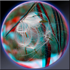 7 Wishes Thistle Ball 3D (DarkOnus) Tags: macro closeup lumix stereogram 3d pennsylvania thistle anaglyph seeds wish stereography buckscounty redcyan wishies floatingseeds dmcfz35