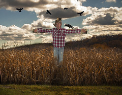 36.of365.1 (Modeflip) Tags: clouds scarecrow crows