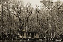FISHING CAMP B/W (t.rex7000) Tags: old camp blackandwhite bw house rural fishing cabin rustic alabama southern bayou swamp spanishmoss wetland tensawriver mobiletensawdelta trex7000 arpub