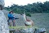 Peru-0714.jpg (Matt and Debbie) Tags: peru llama 2015 wayna winaywayna wiñay