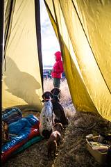 Daybreak (The Noisy Plume) Tags: tent camp tipi dogs germanshorthairedpointer morning cofee