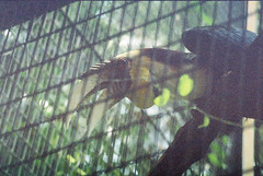 F1000017_lr (chi.ilpleut) Tags: singapore 2017 myday march outdoor outing film ilovefilms shootfilm kodakfilm expiredfilm jurongbirdpark birds seeing greenery ilovegreen analogue analog track grain