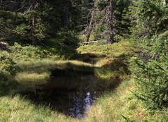 08-IMG_8377 (hemingwayfoto) Tags: österreich austria europa fichte hochmoor hohetauern landschaft moorauge nationalpark natur naturschutzgebiet rauris rauriserurwald reise tannenbaum urwald wald