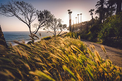 Magic hour glow all over place (ScorpioOnSUP) Tags: california pacificocean sanpedro breezy cliff cloudless glow haze hazy horizon lateafternoon nopeople ocean oceanview palmtrees park path silhouette sky solitude spring sun sunbeams sunrays trail trees warmth wildplants wildflowers windy