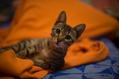 Sky (Valentine Kleyner) Tags: nikon nikkor nikkors cat d600