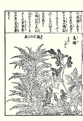 Rose balsam and monkshood (Japanese Flower and Bird Art) Tags: flower rose balsam impatiens balsaminea balsaminaceae monkshood aconitum chinense ranunculaceae shusui shimokobe kano woodblock picture book japan japanese art readercollection