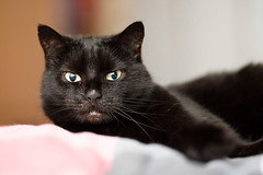 Lilli (rengawfalo) Tags: katze cat pet animal black eyes augen haustier