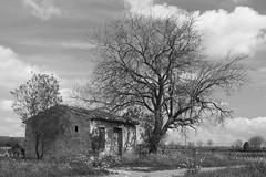 La bicoque abandonnée * (Titole) Tags: abandonned tree house ruins decayed titole nicolefaton clouds hut shanty shelter blackandwhite bw noiretblanc nb