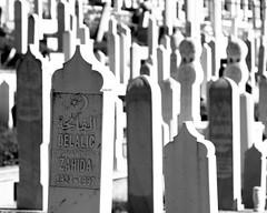 Zahida (Herminio.) Tags: sarajevo bosnia herzegovina lápida tumba cementerio musulmán islam medialuna estrella bosniaandherzegovina tombstone tomb cemetery muslim crescent star bòsnia hercegovina làpida tomba cementiri musulmà mitjalluna delalic zahidadelalic