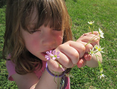 She picked these tiny flowers for me - Explored! (Monceau) Tags: little girl flowers hands bouquet closeupportrait odc explore explored