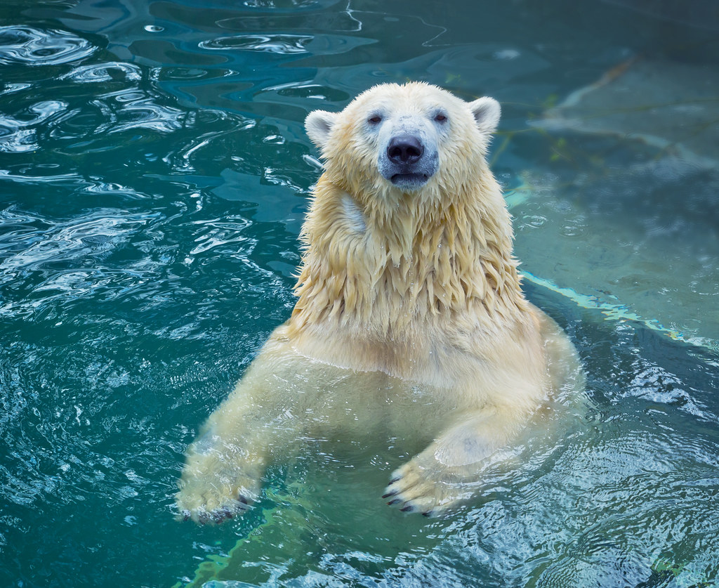 """rainfall water and big white bear We brits love to complain about the weather when we're hit by """"adverse"""" weather conditions,  so here's how you can help conserve water."""