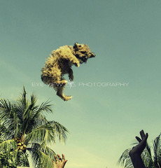 Air Dog (Eye-View Photography) Tags: trees summer dog green nature canon jamaica eyeview
