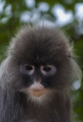 Are You Sad? (lany84) Tags: blue nature face animals canon sadness monkey asia sad natural burma think bleu amour pixel thinking tropical myanmar asie capture animaux tame singe birmanie makak aim tropique pixelistes 1000d makakmonkey