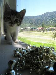 Pequea Run (Alisoninoska) Tags: summer paisajes cats cute nature landscape navidad gatos animales recuerdos puyuhuapi macrofotografa