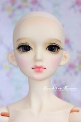 Little Elva Misora (Dandelion Dream) Tags: face up doll little 14 dreaming commission elva msd faceup misora