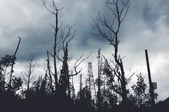 (provincijalka) Tags: blue autumn trees cloud mountain storm cold fall rain dark utah solitude different ominous gray silhouettes september lookingup breathing deformed dense outcasts guardsmanspass provincijalka