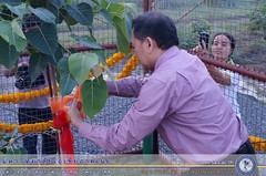 สมโภชต้นพระศรีมหาโพธิ์ (7)