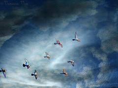 "Birds in the blue (Vanessa Vox) Tags: birds artdigital creativemindsphotography magicunicornverybest magicunicornmasterpiece ""exoticimage"" vanessavox brushesandpixels birdsintheblue"
