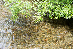 _MG_3311a (markbyzewski) Tags: alaska salmon mendenhallglacier juneau ugly spawn
