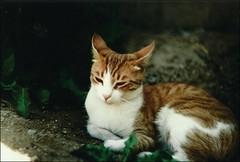 Buffy (Vampyyri.Lauri) Tags: vintage fujifilm analoga zenit analogica rollo fujicolor zenit12xp fotografiaanaloga
