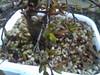 2012-02-14_17-32-05_121 (b0n2a1) Tags: plum bonsai droid floweringplum johnconn