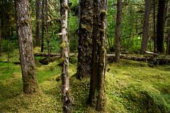 _MG_3998a (markbyzewski) Tags: alaska rainforest ugly glacierbaynationalpark muskeg