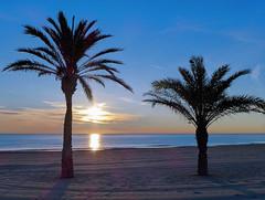 Tranquilidad (Fotomondeo) Tags: sea espaa sun sol beach valencia sunrise mar spain playa palm alicante amanecer palmera salidadelsol lx7 playadesanjuan lumixlx7 panasoniclumixlx7