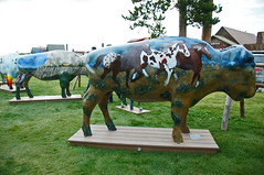 Ponies of the people by Mitzi Nelson (SomePhotosTakenByMe) Tags: city vacation usa art animal america project buffalo montana unitedstates kunst urlaub publicart amerika bison tier büffel westyellowstone paintedbuffalo buffaloroam poniesofthepeople mitzinelson