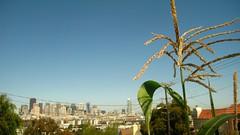 corncity
