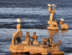 Hanging Out On The Rocks (bigbrowneyez) Tags: sculpture seagulls art nature wet water beautiful birds river fantastic wings shiny rocks dof shimmery shoreline creative feathers meeting sunny natura rapids gathering balance ripples sculptures artful uccello remic bellissimo acua ottawaontariocanada hangingoutontherocks beool