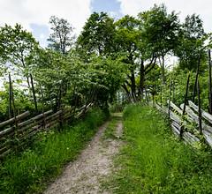 Vreta, June 7, 2015 (Ulf Bodin) Tags: road wood fence se oak sweden sverige vreta hammarskog uppland grdesgrd uppsalaln