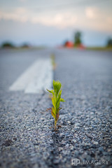 Abandoned Highway (AP Imagery) Tags: road street usa plant abandoned nature weed highway dof bokeh kentucky depthoffield forgotten lone growing asphalt bypass