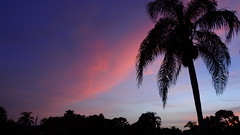 Sunset July 2, 2015 (Jim Mullhaupt) Tags: pink blue sunset red wallpaper sky orange sun color tree weather silhouette yellow clouds landscape gold evening nikon flickr sundown florida dusk palm exotic p900 tropical coolpix bradenton endofday mullhaupt nikoncoolpixp900 coolpixp900 nikonp900 jimmullhaupt