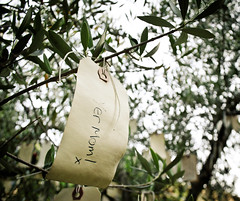 yer mom. (fetidadders) Tags: california ca olive wish portcosta olivetree wishing wishingtree