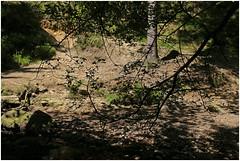 trs maret 46 (beauty of all things) Tags: forest belgium wald malmedy belgien trsmarettal