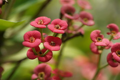 Succulent (ddsnet) Tags: plant succulent sony hsinchu taiwan ii resolution   ilc   sinpu hsinpu  mirrorless    interchangeablelenscamera  7r  sony7rii ilce7rm2 7rii