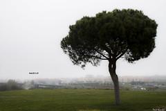 Madrid's fog - La niebla de Madrid (RobertoHerreroT) Tags: madrid tree arbol spain españa niebla fog robertoherrerotardon canon canonista canon1100d winter invierno nature