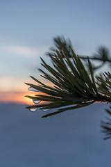 Martimoaapa 17.2.2017 - Valkama 3 (Juho Holmi) Tags: simo lapland finland fi martimoaapa martimo swamp mire reserve suo nature aapa suomi finnland finlandia beautiful skiing ski winter snow lumi kemi keminmaa lappi pohjoinen pohjoissuomi north northern europe eurooppa finnish wilderness hut autiotupa pentax k3 k 3 ii sigma 1020mm f35 35 1020 10 20 recreational recreation luonnon suojelu alue luonnonsuojelualue sports talvi snö ricoh thisisfinland visitfinland sun set sunset valkama laavu leanto
