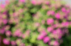 Blur natural and light background (phuong.sg@gmail.com) Tags: abstract background beautiful blur blurred blurry bokeh camera circle city color colorful day decoration defocus defocused depth design field focus garden glow grass green happy landscape lens life light many modern nature park real road shallow shape street summer sun sunny texture theme tree unfocused urban wallpaper