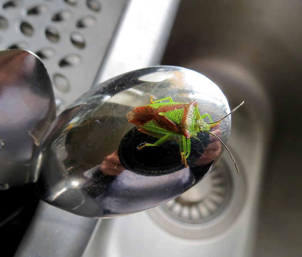 Green Centipede In Kitchen Sink