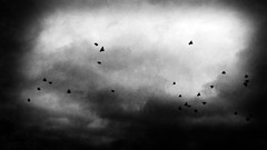 Fly My Pretties (.Sh33na.) Tags: sky birds clouds dark mood loneliness shadows darkness atmosphere eerie spooky mysterious lonely emptiness sdp flockofbirds shadowsandlight darknessandlight sheenaduckworthphotography sh33na
