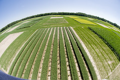 Agricultural Biofuels (Research) (The Open University (OU)) Tags: trees england people birds animals campus landscape energy miltonkeynes diverse creative diversity science study research ou learning environment teaching polar agriculture cultures climate global universities biofuels theopenuniversity openlearn