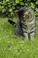 """""""Tom and Jerry"""" (Gies!) Tags: cat mouse kat muis"""