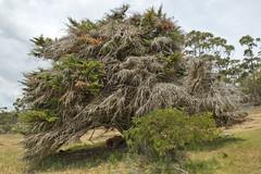 TAS Maria Island-Trees (scrumpy 10) Tags: trees nature landscape island nikon maria natur australia tasmania australien mothernature landschaften d800 mariaisland tasi tasmanien tasmanianwilderness jacqualine scrumpy10