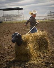 Steer Roping (Sam Stukel) Tags: rodeo lariat roper roping lasso littlecowboy kidsrodeo