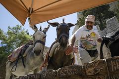 Donkeys - Lindos Taxi (s_evenseth) Tags: nikon taxi donkey greece acropolis rhodes lindos rhodos sigma1020mm d7000