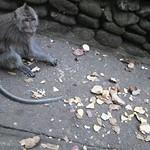 Indonesia, Bali, Ubud, Sacred Monkey Forest Sanctuary