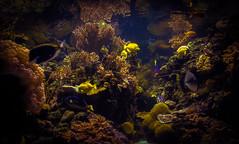 Aquarium (Photography by JS) Tags: fish canon aquarium baltimore